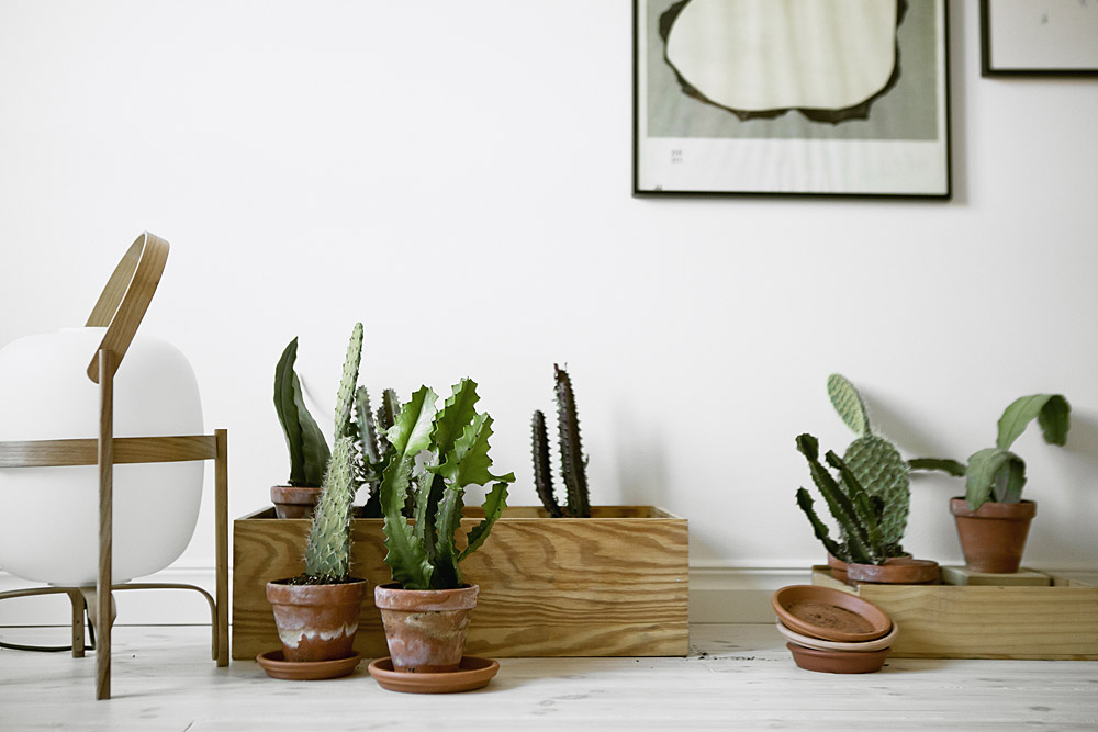 INTERIOR INSPIRATION: CACTUS CUTENESS